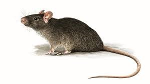 New Android RAT threatens mobile banking users