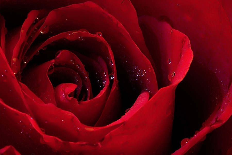 A rose by any other name ....